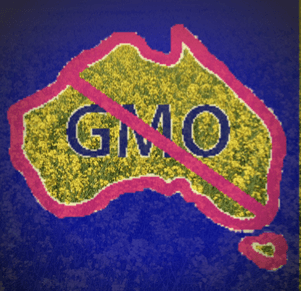 The Cost of Australia's GM Canola Moratorium