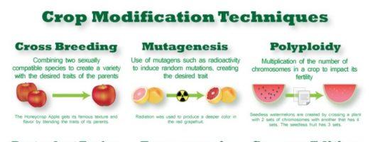 GMOs vs Mutagenesis Plant Breeding
