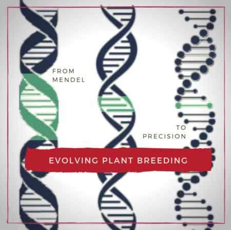 The evolution of plant breeding from punnet squares to precision