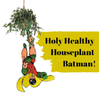 Holy healthy houseplant batman - GM plants