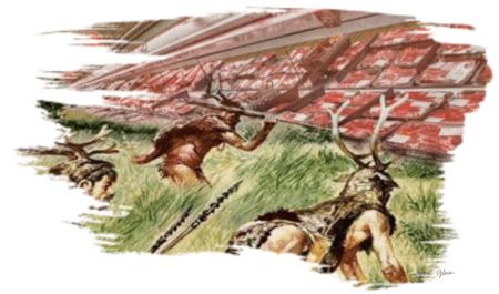 Food security of hunter-gatherers _ Savannah Gleim, 2019